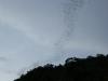 Fledermäuse in der Dämmerung